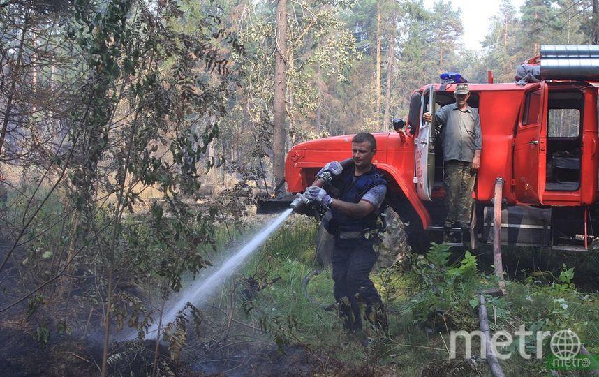 На северо-западе Москвы в посёлке Терехово произошло возгорание травы и деревьев. Архивное фото. Фото Василий Кузьмичёнок