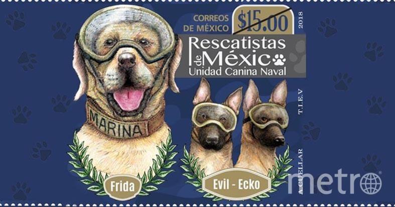 Почтовая марка, на которой изображены знаменитые собаки-спасатели Мексики: Фрида, Эвил и Эко. Фото Cortesia, Jazmin Adrian.