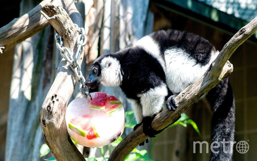 В вольеры животных сотрудники зоопарков помещают кубики льда с фруктами и овощами. Зоопарк Ганновера, Германия. Фото AFP