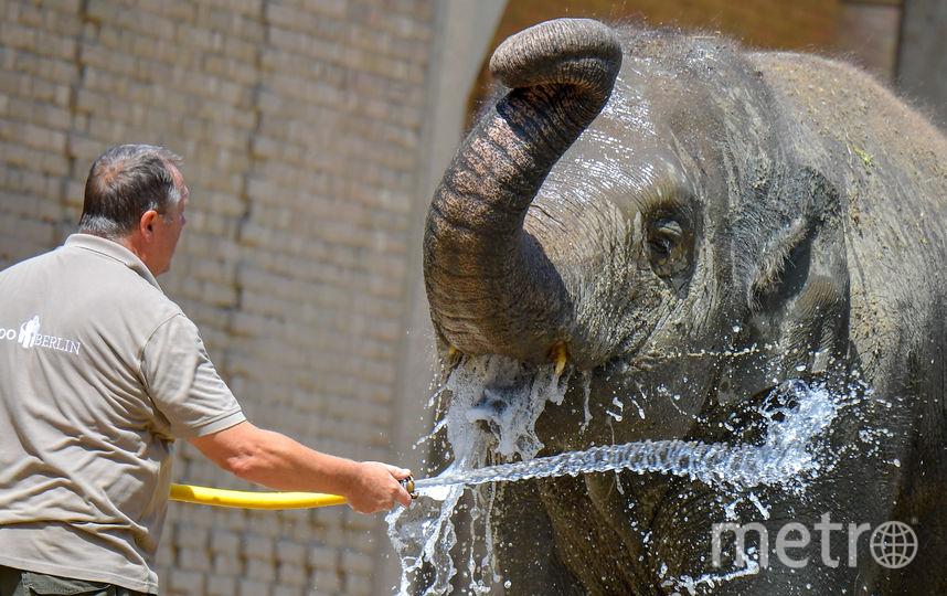 В зоопарке Берлина, Германия. Фото AFP