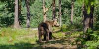 Мужчину, похожего на мумию, спасли из медвежьей берлоги в Сибири