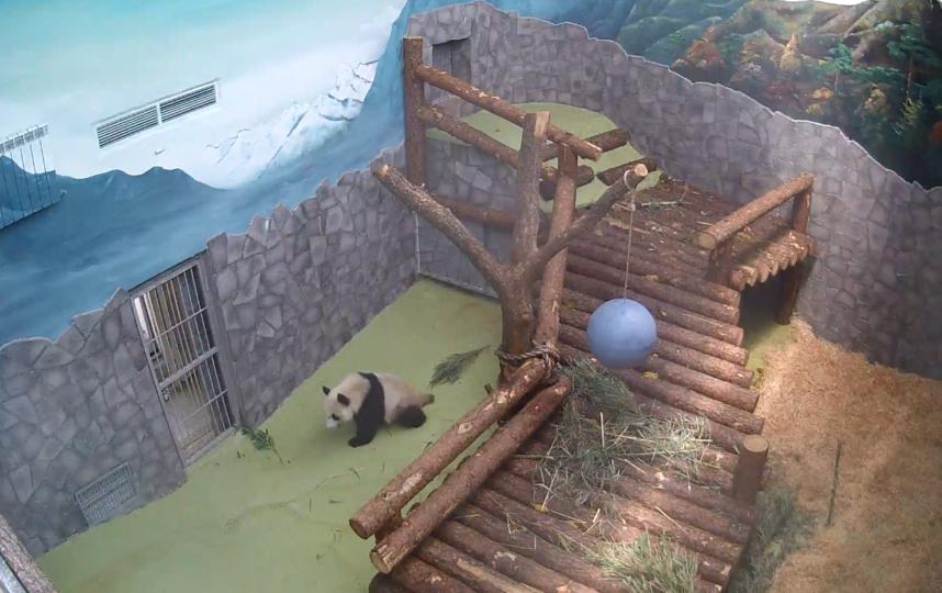 Скриншот moscowzoo.ru/about-zoo/live-stream/.