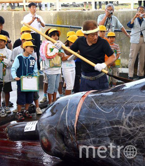Спустя 33 году Япония возобновила охоту на китов в коммерческих целях. Фото Getty