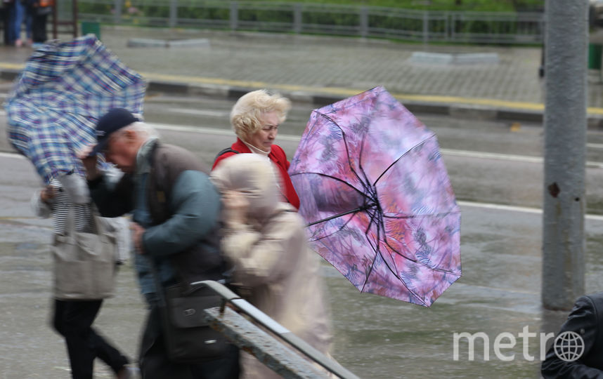 Жёлтый уровень погодной опасности объявлен в Москве из-за сильного ветра. Фото Василий Кузьмичёнок