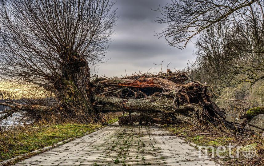 Дерево. Фото Pixabay
