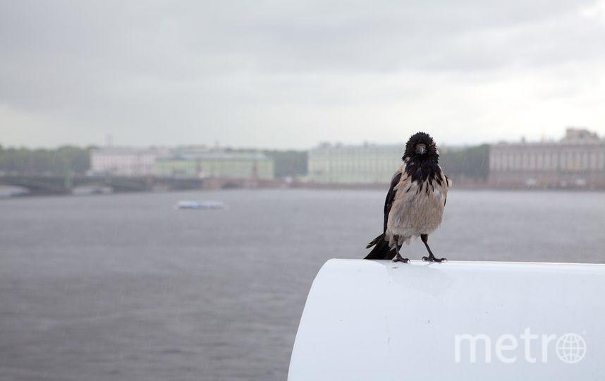 В Петербурге ожидаются дожди и ветер. Фото pixabay.com