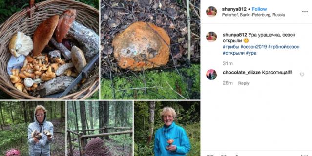 Поход за грибами в Петергофе - фото выложила петербурженка.