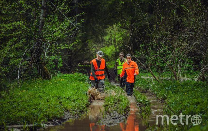 """Добровольцем спасательного отряда может стать любой человек, которому иссполнилось 18 лет. Те, кто младше или не могут идти в лес, занимаются развозкой, распечатывают и расклеивают листовки, занимаются обзвоном больниц и поиском людей через соцсети. Фото «Лиза Алерт», """"Metro"""""""