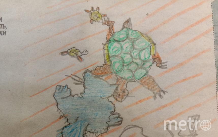Любовь к домашним животным особенная. Мурзик и черепаха с детками. Фото Марина Иванова.