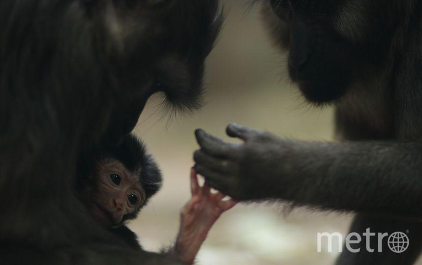Первые кадры от 15 мая. Фото Ленинградский зоопарк, vk.com