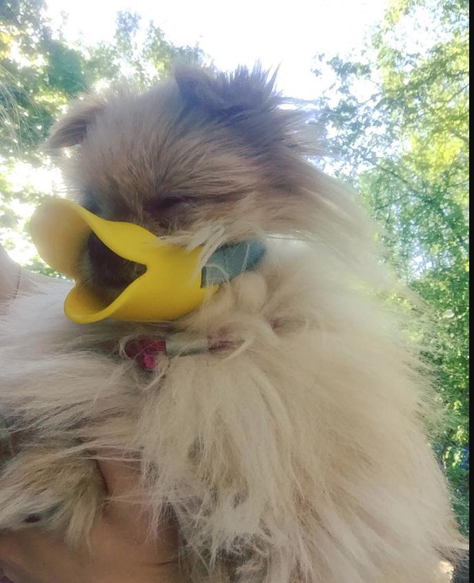 Собака в наморднике. Фото Instagram: @elizaveta_kuklinaed.