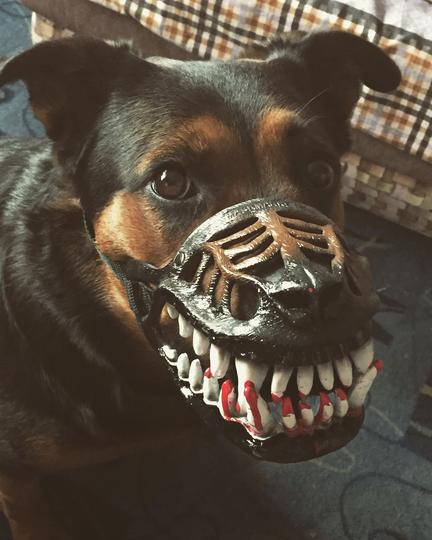 Собака в наморднике. Фото Instagram: @tanya_2017_t.