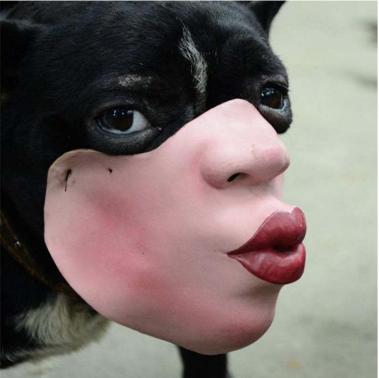 Собака в наморднике. Фото amazon/ AXAYINC