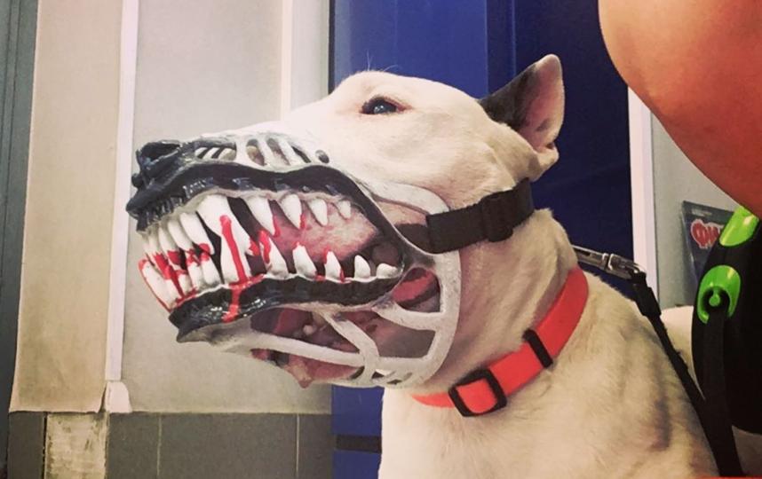 Собака в наморднике. Фото Instagram: @terrysvetlanovich