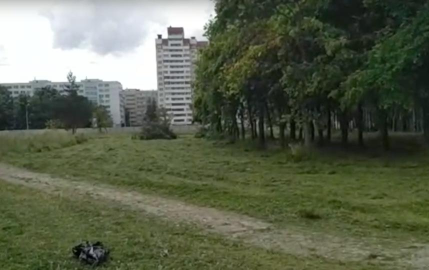 Скриншот видео vk.com/kalininskiyzapark. Фото vk.com