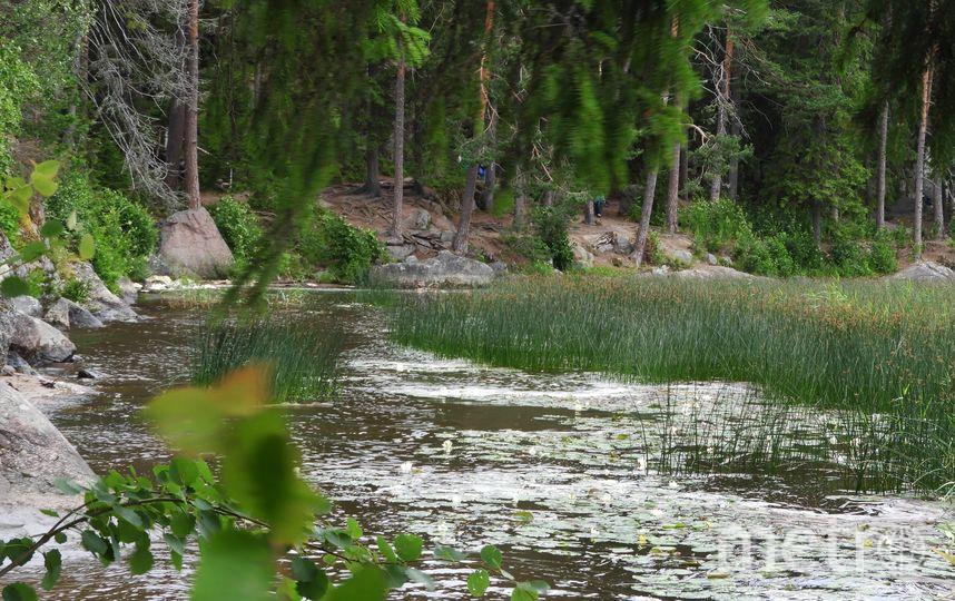 Лилии в Монрепо. Фото vk.com/monrepovyborg, vk.com