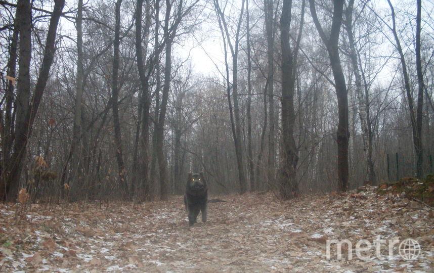 """У нашей читательницы Натальи тоже есть своя """"собака Баскервилей"""". Кадр сделан во время прогулки в Сокольниках. Фото Наталья, """"Metro"""""""