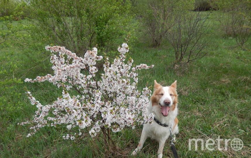 """Это Михей. Любимец хозяев и верный друг. Он метис (дворянин), с веснушками и розовым носом. Очень нравится детям. Но если понадобится - верный охранник. В любую погоду всегда стоит на страже дома и семьи. Фото Владимир, """"Metro"""""""