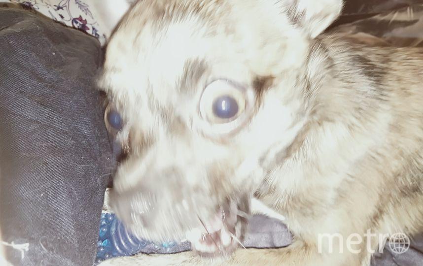 """Это Амур. Иногда он думает, что он большая злобная собака. Но на самом деле он очень добрый. Фото Роман, """"Metro"""""""