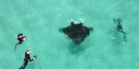 Появилось видео, как скат приплыл за помощью к людям