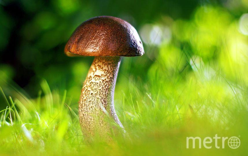 К процессу сбора грибов надо подходить осторожно. Фото https://pixabay.com/
