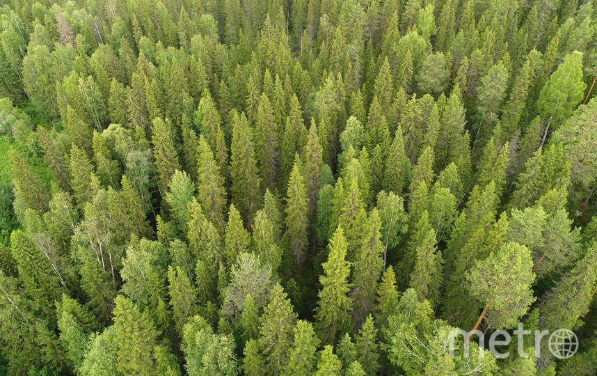 Ученые называют первозданные леса малонарушенными, так как они пока не испытали на себе существенного влияния человека.Это последние уголки дикой природы, где природные процессы не нарушены, а редким видам растений и животных пока ничто не угрожает. Фото предоставлено WWF