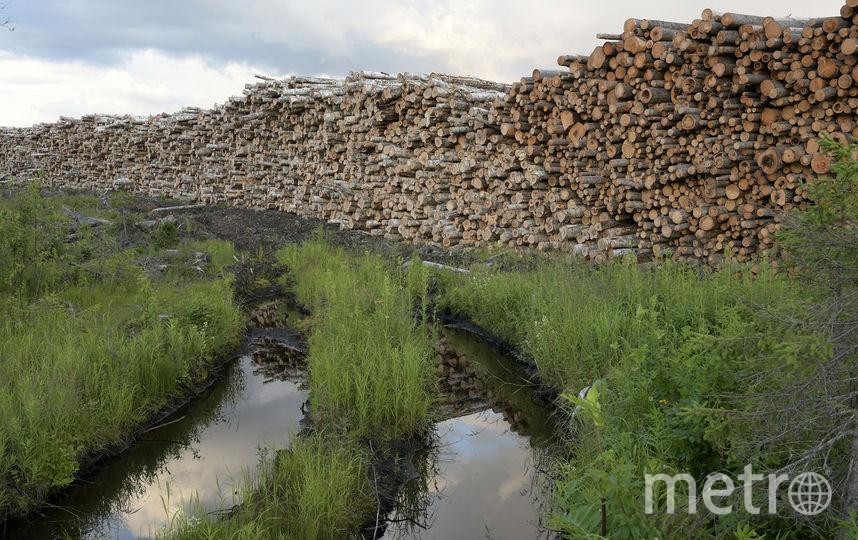 Штабеля заготовленного леса в ожидании вывозки. Фото предоставлено WWF