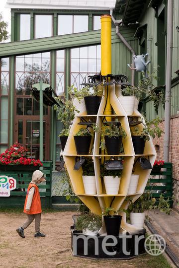Четырёхметровая «Зелёная граната». Фото Предоставлено организаторами