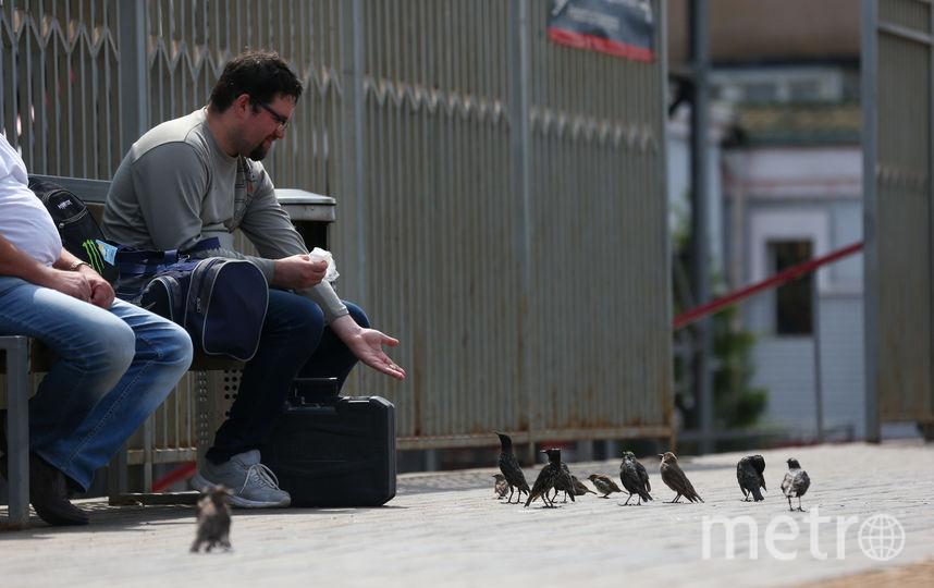 В отсутствие голубей пассажиры электричек с удовольствием кормят скворцов (птицы покрупнее) и воробьёв (помельче). Фото Василий Кузьмичёнок