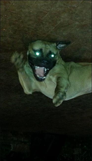 """У нашего читателя Егора тоже есть своя """"собака Баскервилей"""". Этой Рей. И он очарователен, не правда ли? Фото Егор, """"Metro"""""""