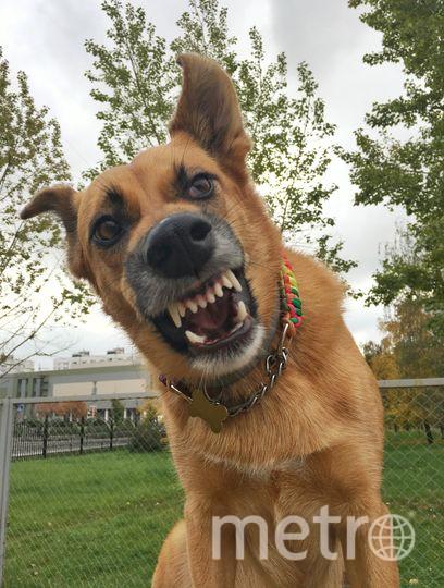 """""""Я Зара! Облаю без базара!"""" Этой красотке 6 лет. У Зары нет породы, но для своих хозяев она самая любимая собака в мире. Фото Эмма, """"Metro"""""""