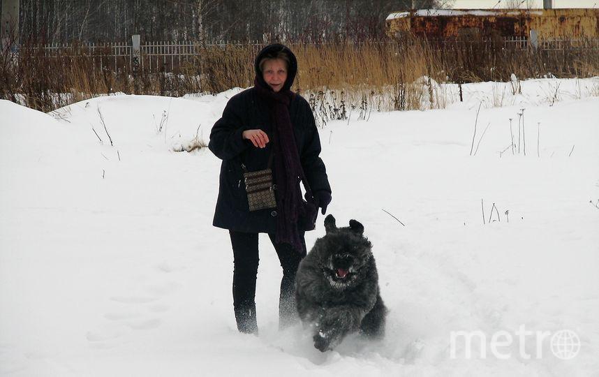 """Это Фландрский бувье с хозяйкой Ларисой. Пастушья порода собак – пасёт всех!!! Его зовут Руни, ему 6 лет. Фото Александр, """"Metro"""""""
