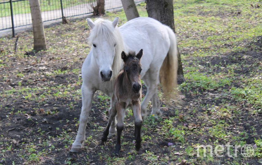 Архивное фото. Фото vk.com/zoo_pnz / Пензенский зоопарк, vk.com