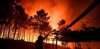 Более тысячи человек борется с лесными пожарами в Португалии