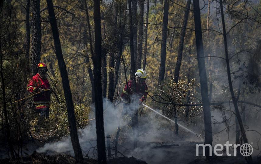 На борьбу с огнем в регион отправлены сотни пожарных. Фото AFP