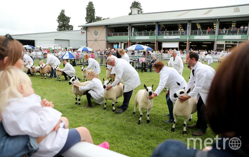 Royal Welsh Show-2019. Фото Getty