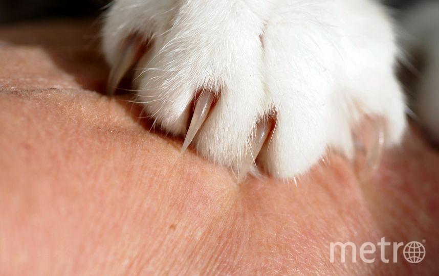 В штате Нью-Йорке запретили удалять когти у кошек. Фото pixabay.com