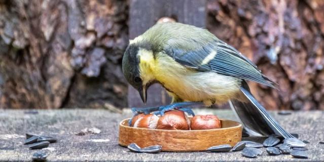 Синица – наш аналог птицы счастья.