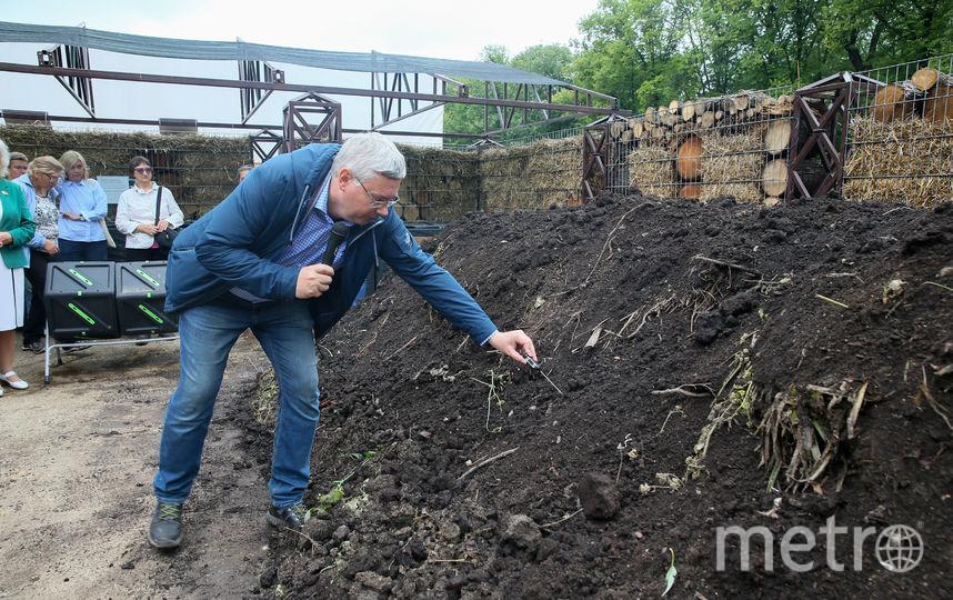 Главный садовник Антон Дубенюк проверяет температуру внутри компостной кучи. Фото Василий Кузьмичёнок
