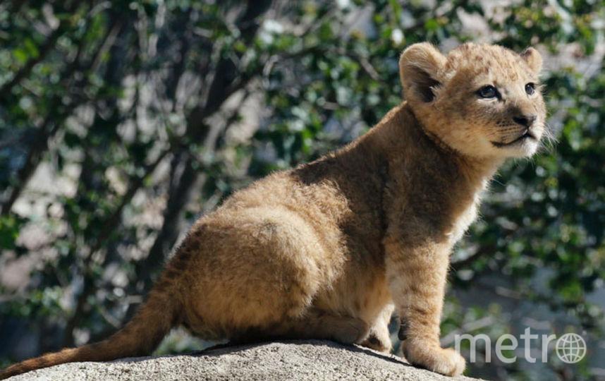 Бахати в детстве. Фото Dallas Zoo