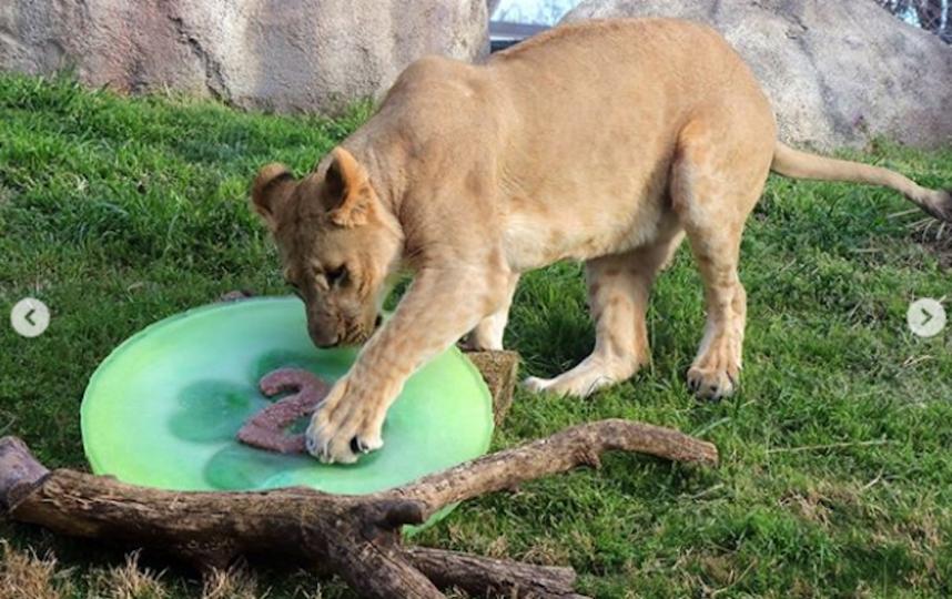 Бахати сейчас. Фото instagram Dallas Zoo