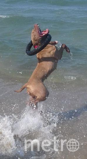"""Меня зовут Вероника, кличка собаки - Каллисто. Каллисто грозная собака, которая всех заобнимает и зацелует до смерти. Фото """"Metro"""""""