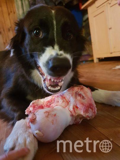 """Саша 3 года и Катя 10 лет. Наша собака Дейнерис самая добрая, умная и красивая, но когда ест сахарную косточку, становится настоящей Баскервилей!. Фото """"Metro"""""""