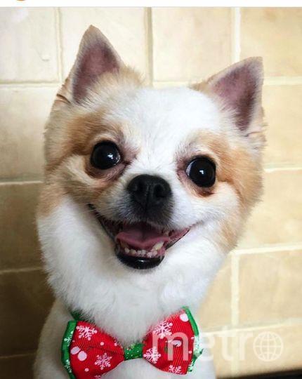 """Марти! Самый счастливый пёс на планете! Фото Мария Торнуева, """"Metro"""""""