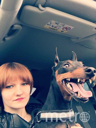 """Санни. Самый «добрый» пёс на свете)))). Фото """"Metro"""""""