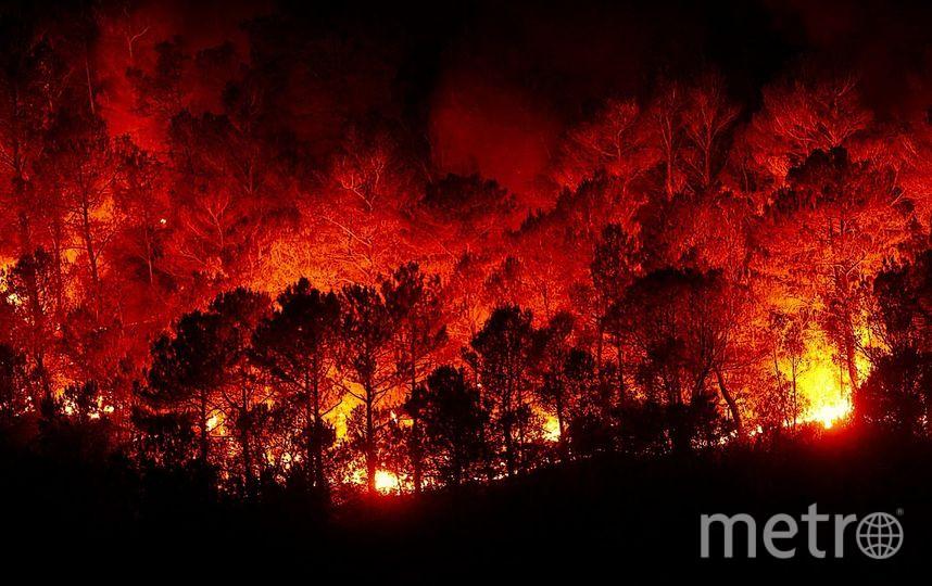 Пожар в лесу. Фото Pixabay