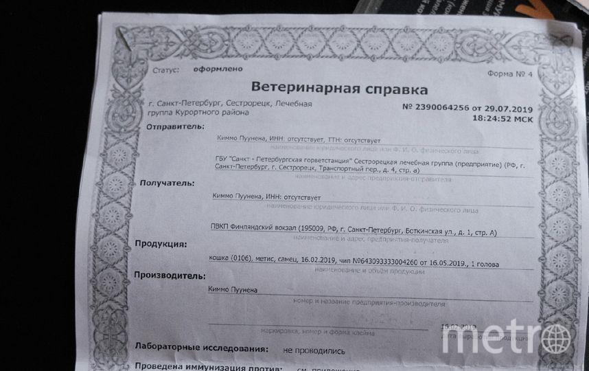 "Эрмитажный кот Николай. Фото Алена Бобрович, ""Metro"""