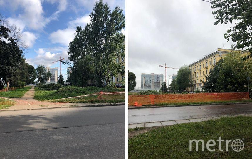 Петербуржцы бьют тревогу: в городе все чаще вырубают деревья. Фото Красивый Петербург, vk.com