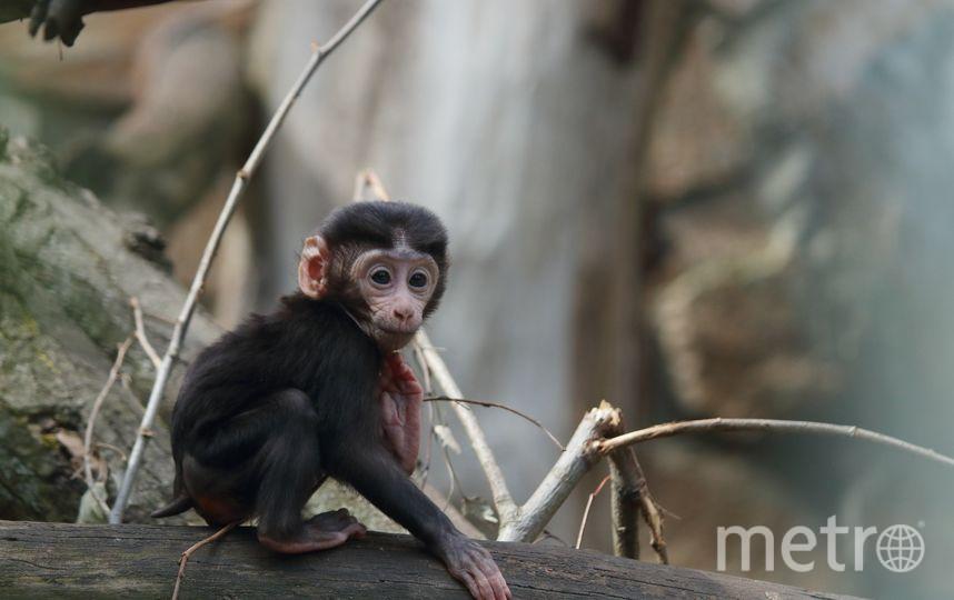 """Такая забавная обезьянка по имени Ная радует посетителей ЛенЗоо. Фото https://vk.com/spbzoopark, """"Metro"""""""