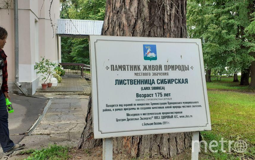 "В Вязёмах. Фото Светлана Перцова, ""Metro"""